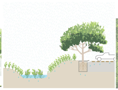 NATURE-BASED SOLUTIONS IN METROPOLITAN AREAS: CHARACTERISTICS AND BENEFITS